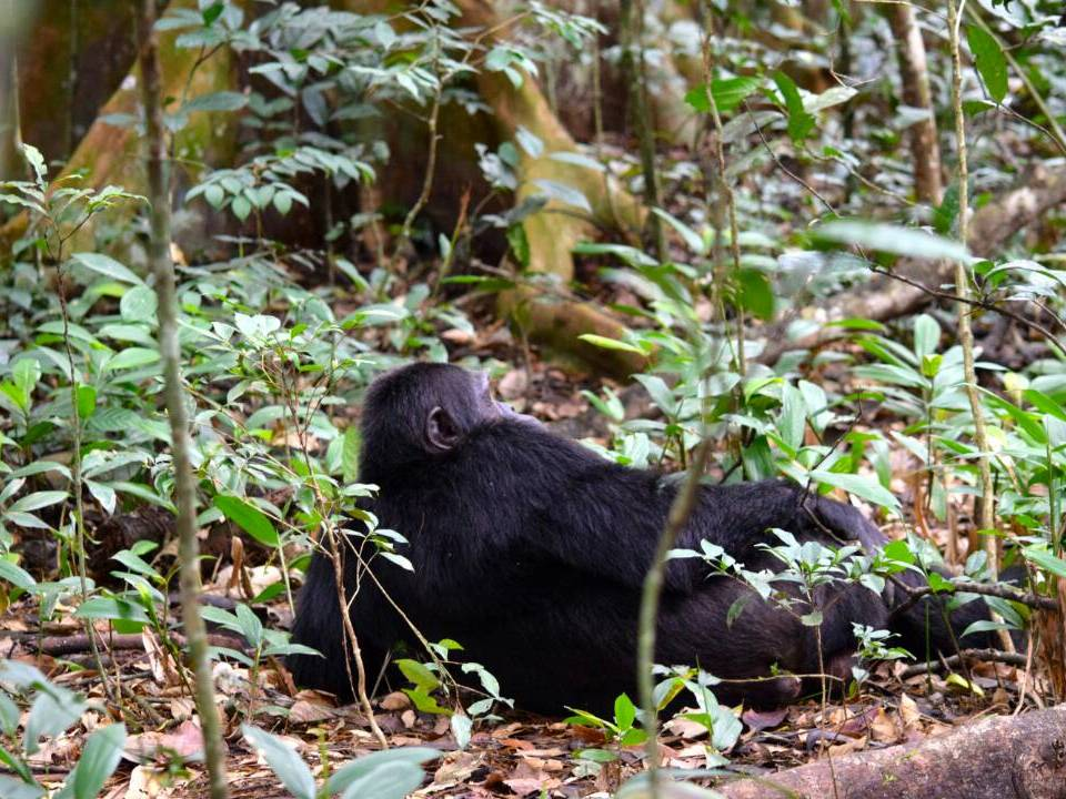 18 Day Gorillas and Wildlife Safari