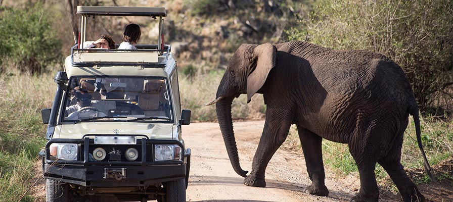 game drive safari