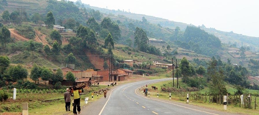 primates safari uganda - Travel to Bwindi Impenetrable National Park (490 Kms)
