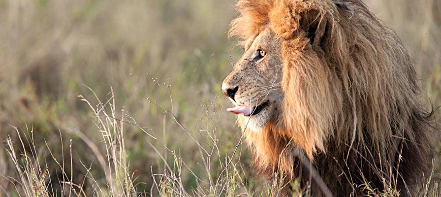 Best of Uganda Safari game drive