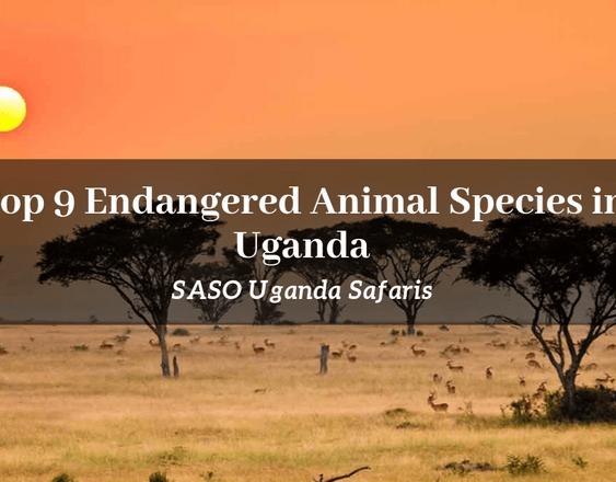 Endangered Animal Species in Uganda