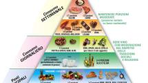 I cibi da consumare illustrati alli'interno di una piramide alimentare