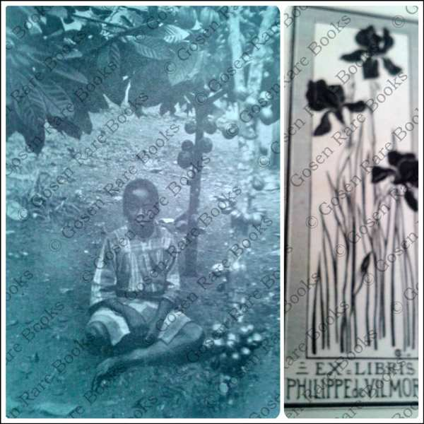 CACAO Auguste Chevalier, Le Cacaoyer dans l'Ouest africain 1908