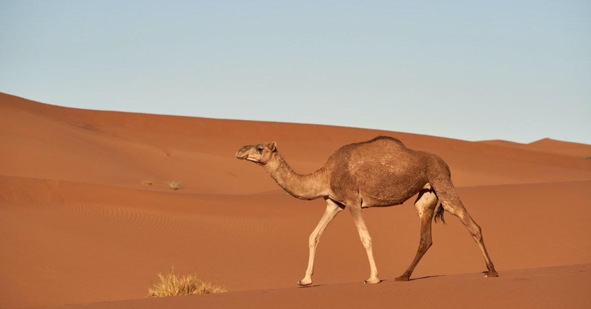 Coar um mosquito e engolir um camelo