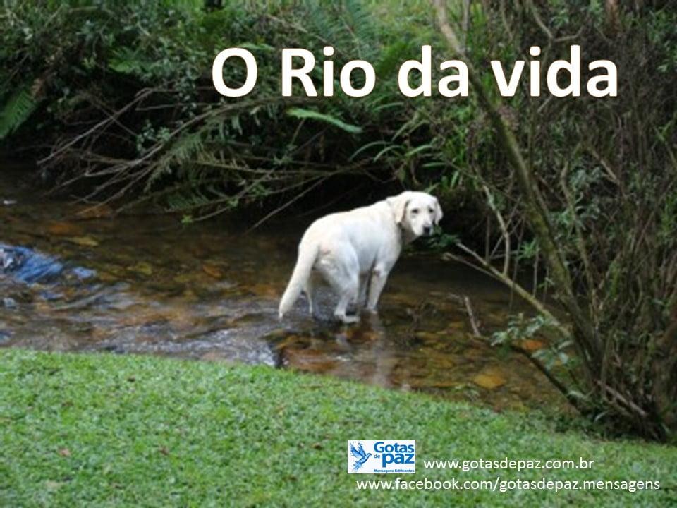 O Rio da vida