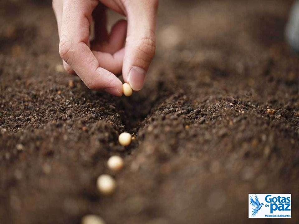 A semeadura é livre, mas a colheita é obrigatória