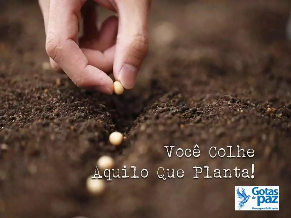 Colhemos o que plantamos