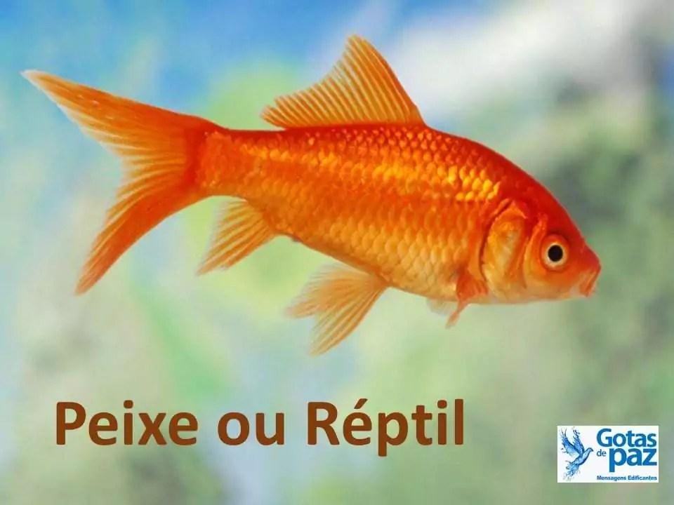 Peixe ou Réptil