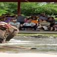 אין כמעט תייר ישראלי או זר, צעיר או מבוגר, שלא מבקר ברוז גרדן. הפארק הענק מציע הופעות בהשתתפות מאות רקדנים המציגים ריקודים מסורתיים, חתונה תאילנדית ואגרוף תאילנדי. במקום נמצא כפר […]