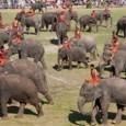 אחד מהפסטיבל המפורסם בתאילנד הפסטיבל נערך במחוז סורין. פסטיבל זה מתקיים בשבת השלישית של נובמבר בכל שנה ושנה. פסטיבל הפילים בסורין מפורסם מאוד לא רק לתיירים, אלא גם מיועד לאנשים […]