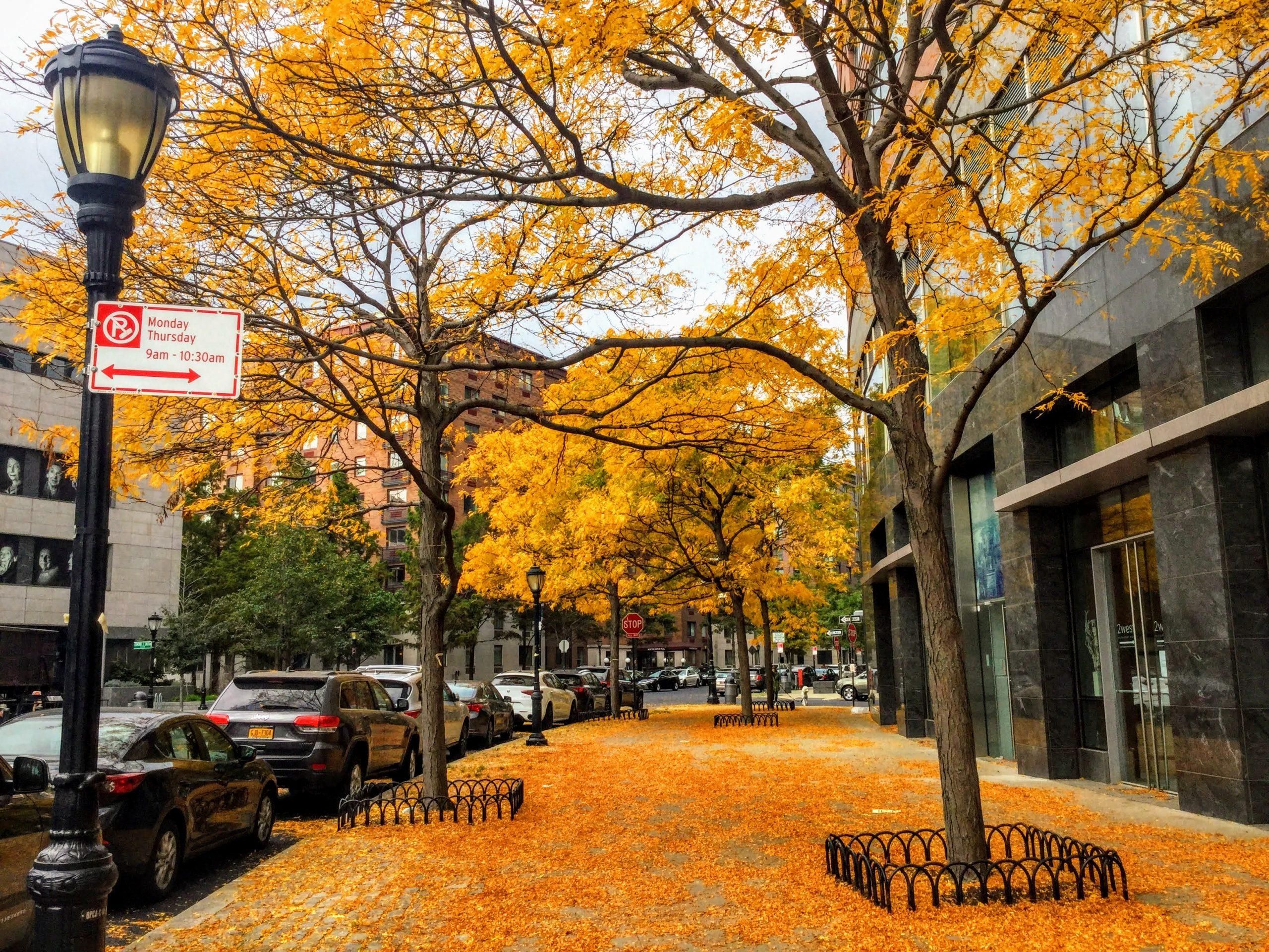 Battery Park fall leaves