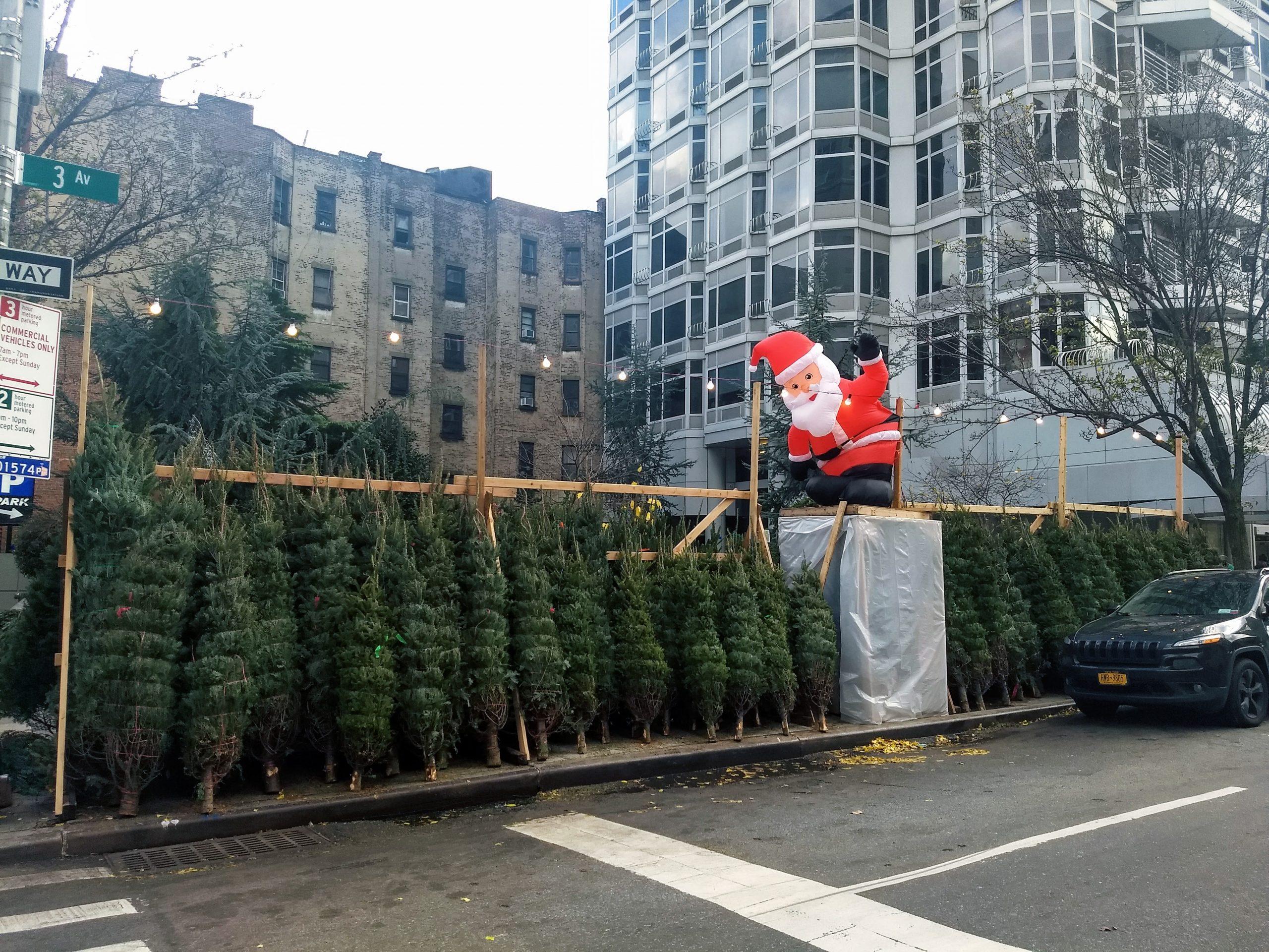 sidewalk Christmas trees
