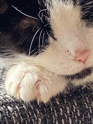 Rascals Katze