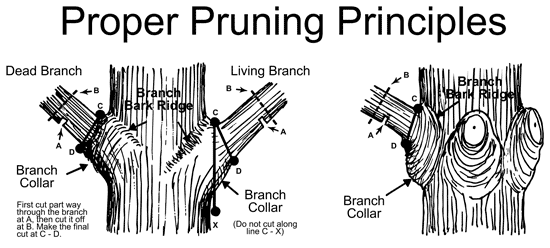 Tree-Pruning-Techniques