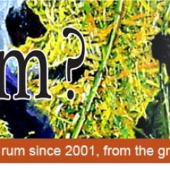 Buy Blue Chair Bay Rum Online Design Contest Denizen Merchant Reserve - Got Rum? Magazine
