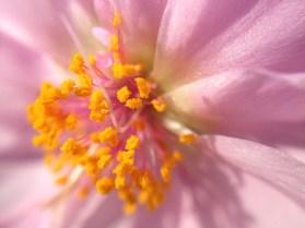 Easy-Macro iPhone 4S - pink flower