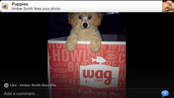 How to Share Photo stream