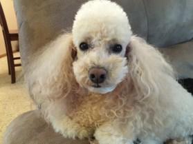 iPhone 6 Plus Sample Photo - Puppy