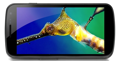 Galaxy Nexus Display