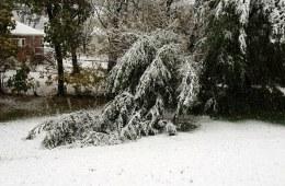 Heavy wet snow trees already down | Flickr - Photo Sharing!