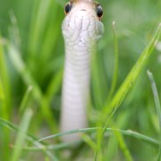 Image of snake in grass