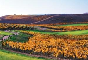 Image of Chardonnay, Napa Valley golf course