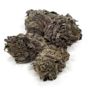 Purple gods gift strain bulk