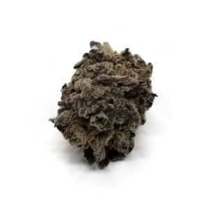 Purple gods gift strain