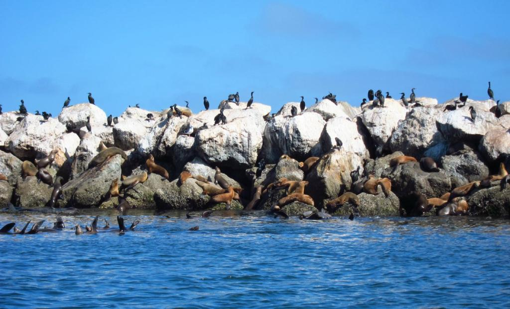 Animals everywhere you look in Monterey Bay