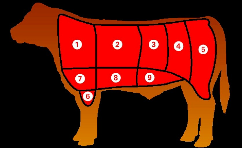 Diagram of steer