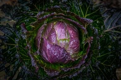 legumes Vincent Bocel-22