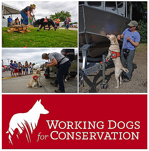 WorkingDogs_WD4C