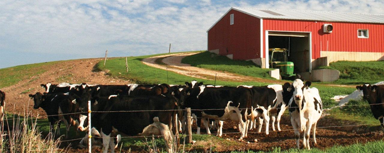 Fresh Farm New York