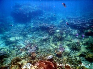 Corals around Redang Reef Resort