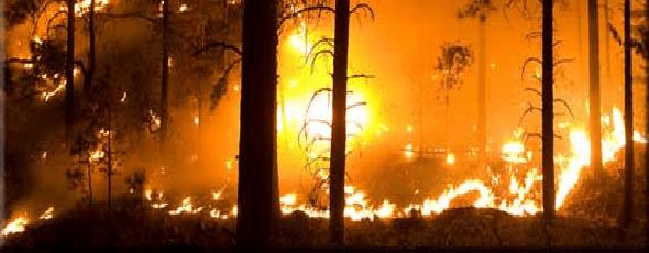 Firefighter Jobs: Firefighting Career in Government