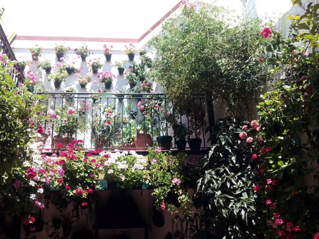 cordoba patios festival event go