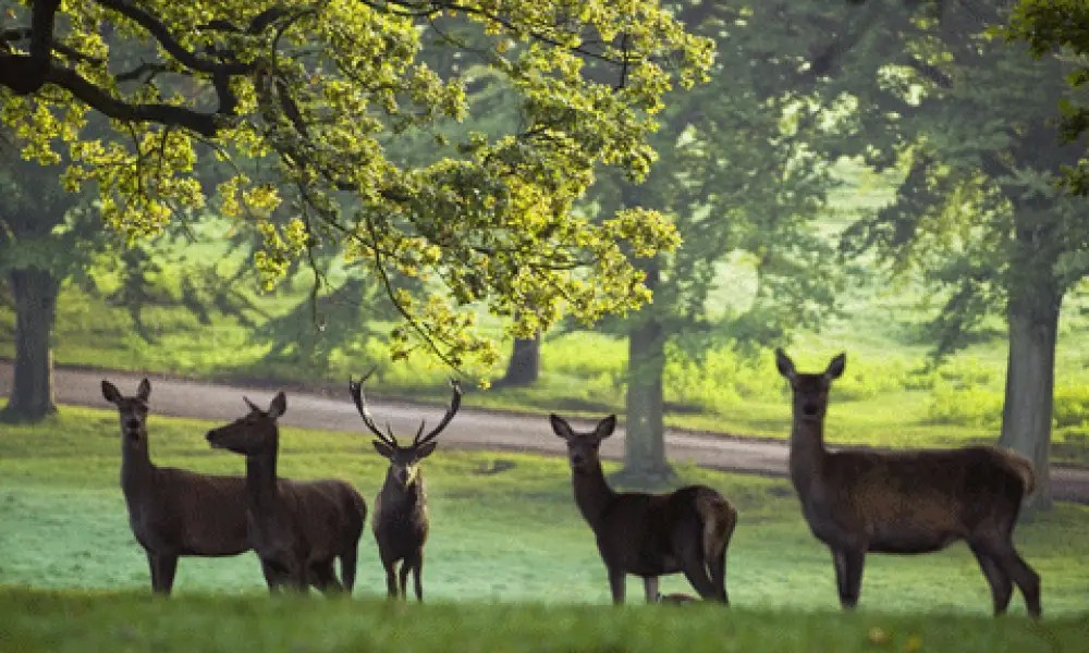 Fountains Abbey & Studley Royal
