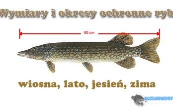 Wymiary i okresy ochronne ryb gozdawaryby.pl