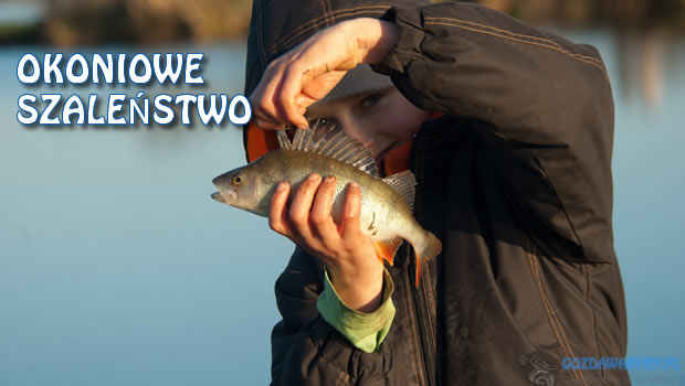 Okoniowe Szalenstwo w skoroszowie gozdawaryby.pl