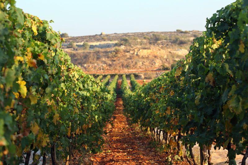 Rural Holidays Agritourism Gozo And Malta