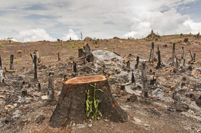 impacto ambiental pela agricultura