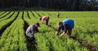 Agricultura e os impactos ambientais