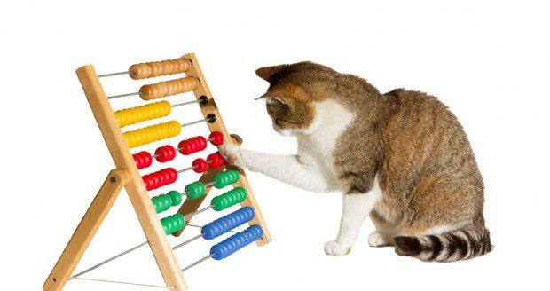 adestrar seu gato