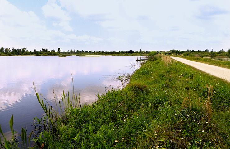 FDOT Mitigation Site Habitat Monitoring