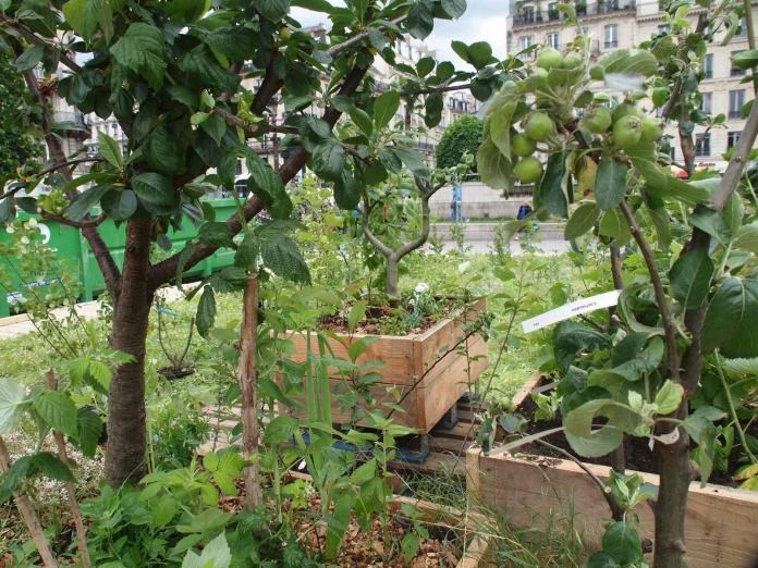Vergers urbains sur le parvis de l'hotel de ville de Paris