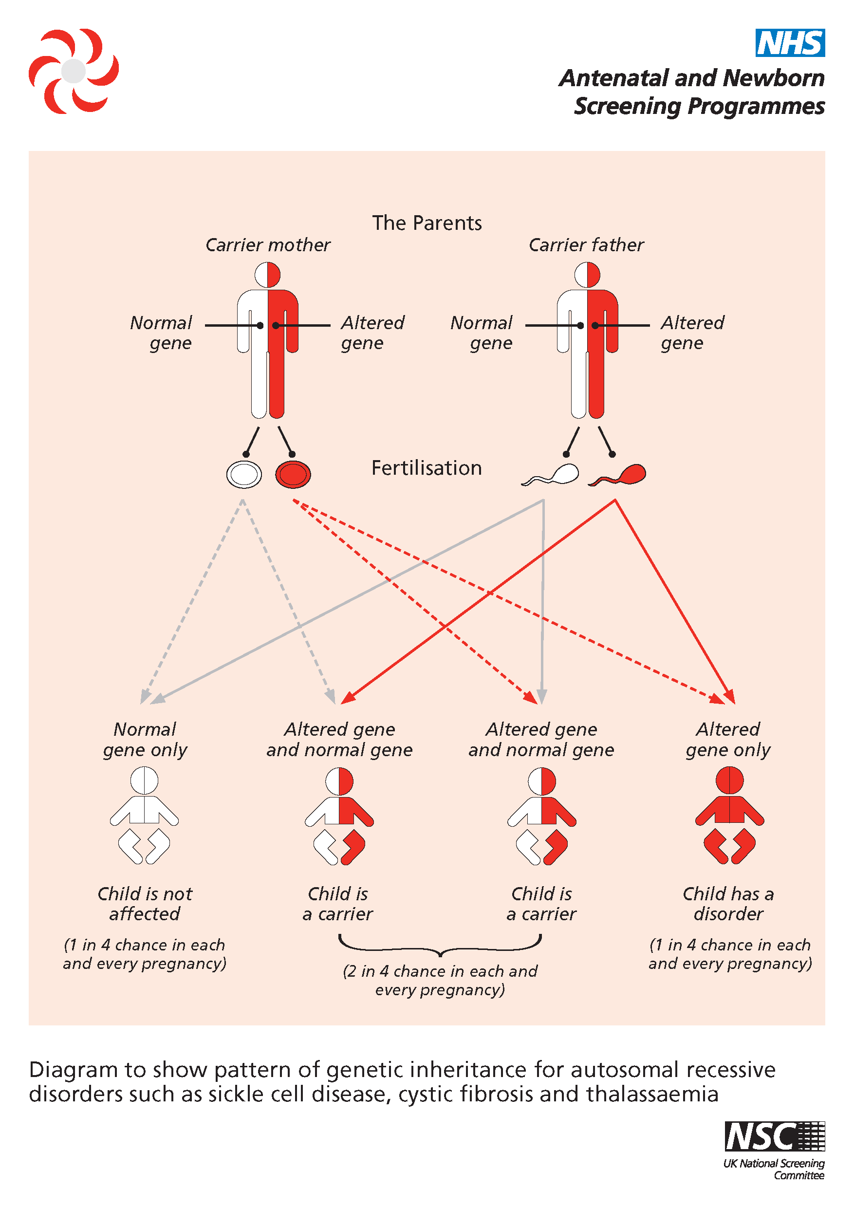Sickle Cell Anemia Inheritance Pattern