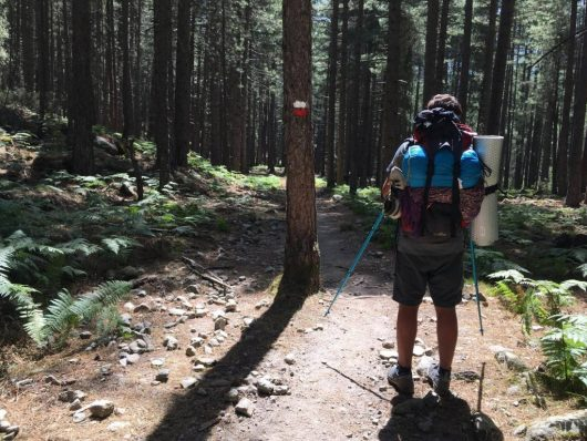 Nicolo, walking in the forest - GR20