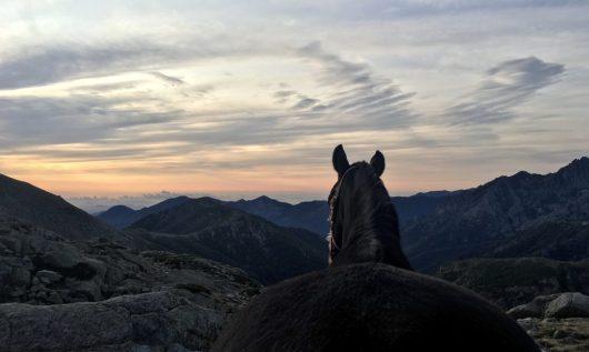 cheval-devant-refuge-corse