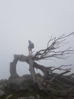 Dans le brouillard - Corse