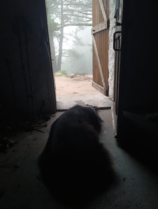 chien-refuge-gr20